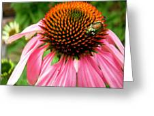 Cone Flower And Guest Greeting Card