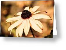 Cone Flower Grunge Greeting Card