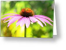 Coneflower Bokeh Greeting Card