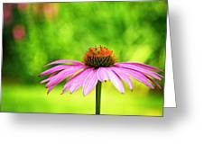 Coneflower In Pink And Green Greeting Card