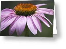 Coneflower Visitor Greeting Card