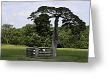 Confederate Grave Of Lafayette Meeks Appomattox Virginia Greeting Card
