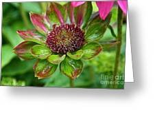 Confused Cone Flower Greeting Card