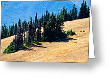 Conifer Clusters Greeting Card