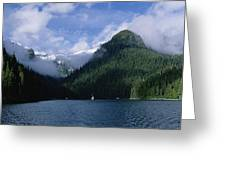Conifer-covered Coastline Of Warm Greeting Card