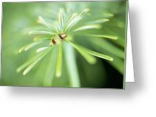 Conifer Leaves Greeting Card