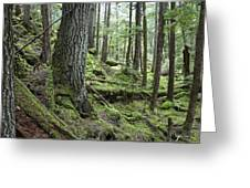Coniferous Forest, Inside Passage Greeting Card