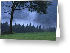 Coniferous Trees Early In The Morning Greeting Card