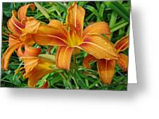 Consider The Lilies Of  The Field - Hemerocallis Fulva Greeting Card