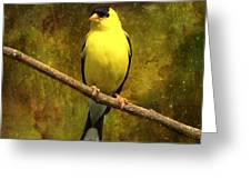 Contemplating Goldfinch Greeting Card