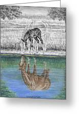 Contemplating Reality - Mare And Foal Horse Print Greeting Card