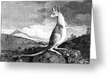 Cook: Kangaroo, 1773 Greeting Card