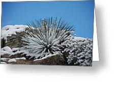 Cool Cacti Greeting Card