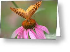 Coordinating Colors Greeting Card