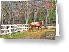Coosaw - Outside The Fence Greeting Card by Scott Hansen