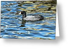 Coot In The Lake Greeting Card