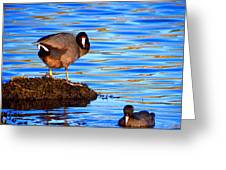 Coots Greeting Card by Catherine Natalia  Roche