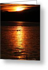Coots In The Sunset Greeting Card