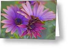 Copper Daisies 1 Greeting Card