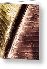 Copper Raindrops Greeting Card