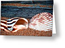 Coquina Shell - 2 Greeting Card
