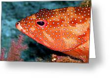 Coral Cod's Head Greeting Card by Serena Bowles