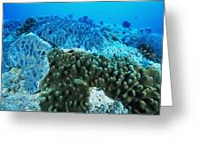Coral Colonies Greeting Card
