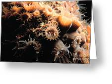 Coral Feeding 5 Greeting Card