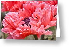 Coral Poppy Greeting Card