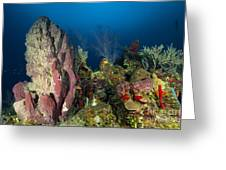 Coral Reef And Sponges, Belize Greeting Card