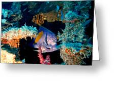 Coral Reef In Red Sea Greeting Card