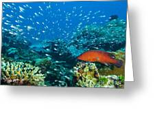 Coral Reef In Thailand Greeting Card