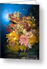 Coral Reef Seascape, Australia Greeting Card