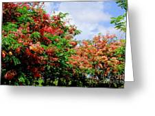Coral Shower Trees Greeting Card