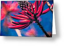Coral Tree Flower Greeting Card
