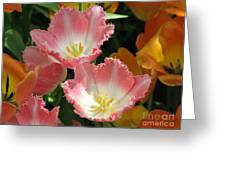 Coral Tulips Greeting Card