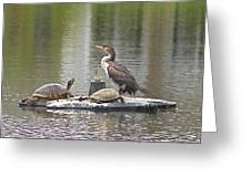 Cormorant And Turtle Duo Greeting Card