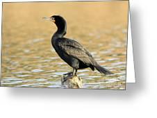 Cormorant At Sunset Greeting Card