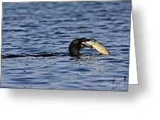 Cormorant Catches A Fish Greeting Card