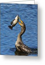 Cormorant Catches Catfish Greeting Card