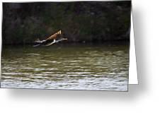 Cormorant Flight Series - 1 Greeting Card