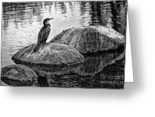Cormorant On Rocks Greeting Card