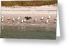 Cormorant Stands Out Greeting Card