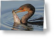 Cormorant With Large Fish Greeting Card
