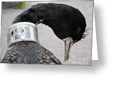 Cormorant With Radio Collar Greeting Card