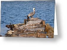 Cormorants And Pelican Greeting Card