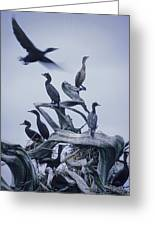 Cormorants Fly Above Driftwood, Grey Greeting Card by Leanna Rathkelly