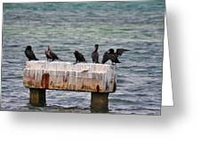 Cormorants Key West Greeting Card