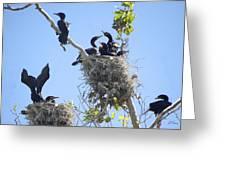Cormorants Nesting Greeting Card