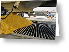 Corn At An Ethanol Processing Plant Greeting Card